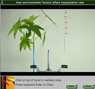 screen shot of Plant Transpiration real online lab
